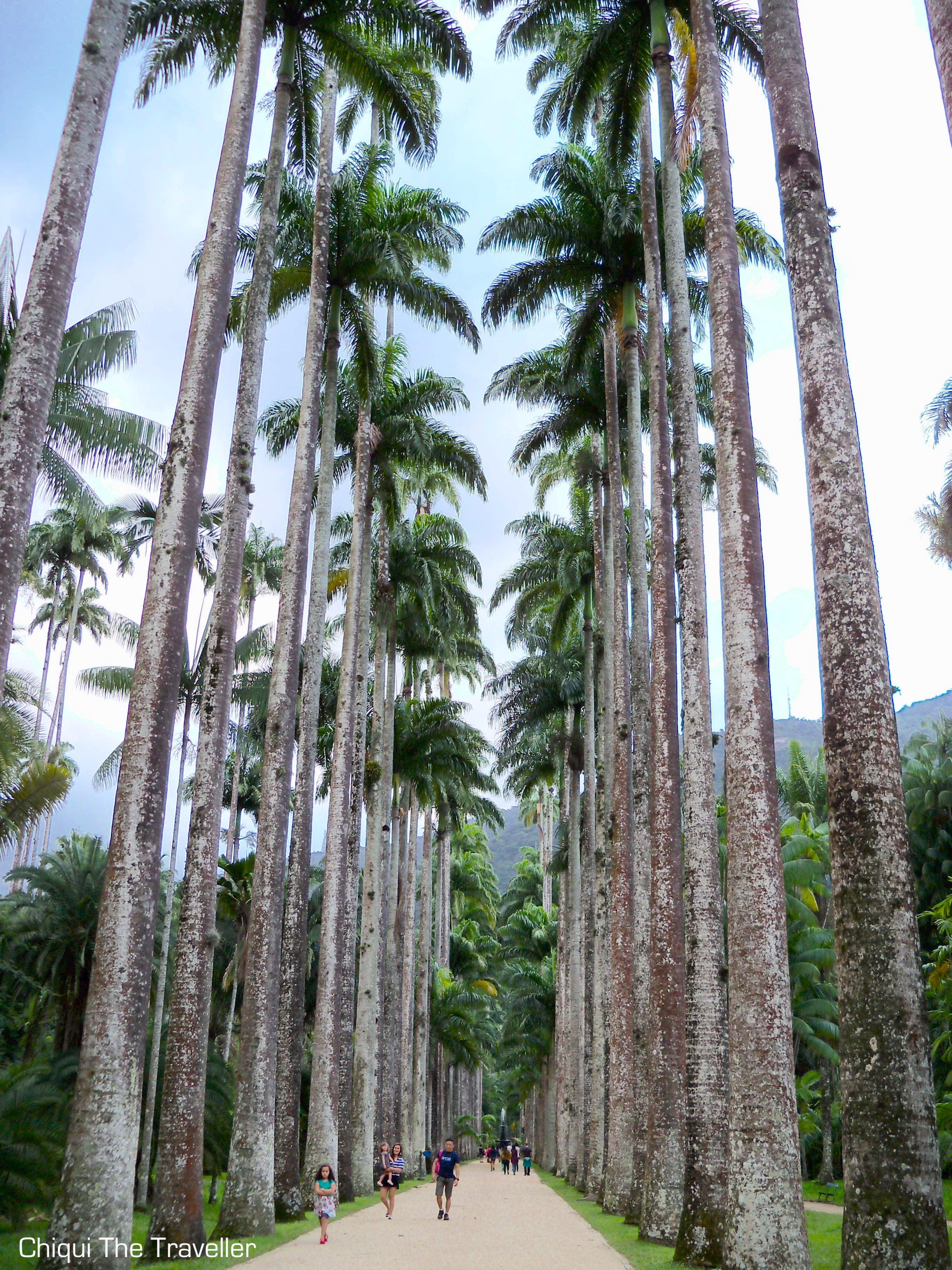 Paseo imperial palmeras Rio de Janeiro