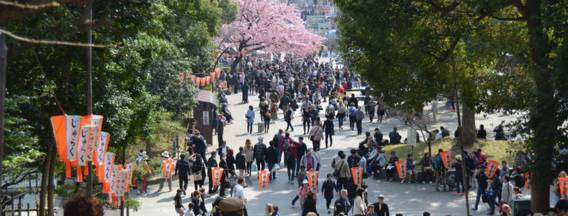 Ueno Tokio sakura